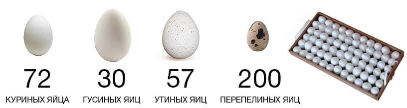 Инкубатор БЛИЦ Норма Цифровой 72 яйца, 220/12В, автомат. поворот, регулировка влажности - фото 5587